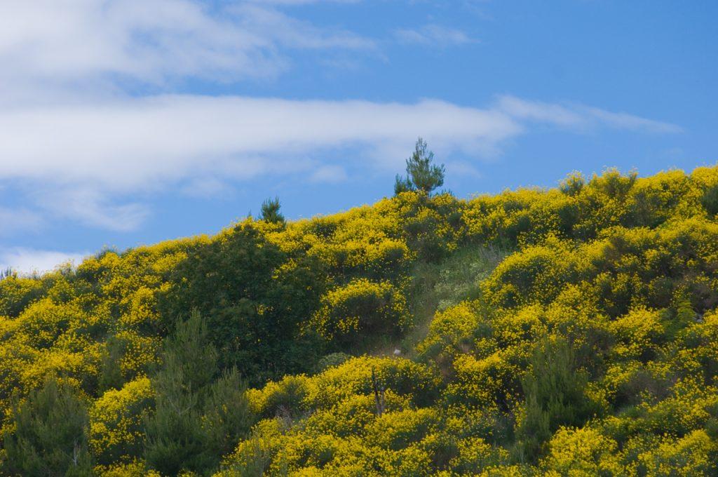 _zg02188-priroda-brnistra-bilje-podstrana